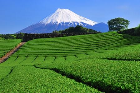 ประเภทของชาญี่ปุ่น